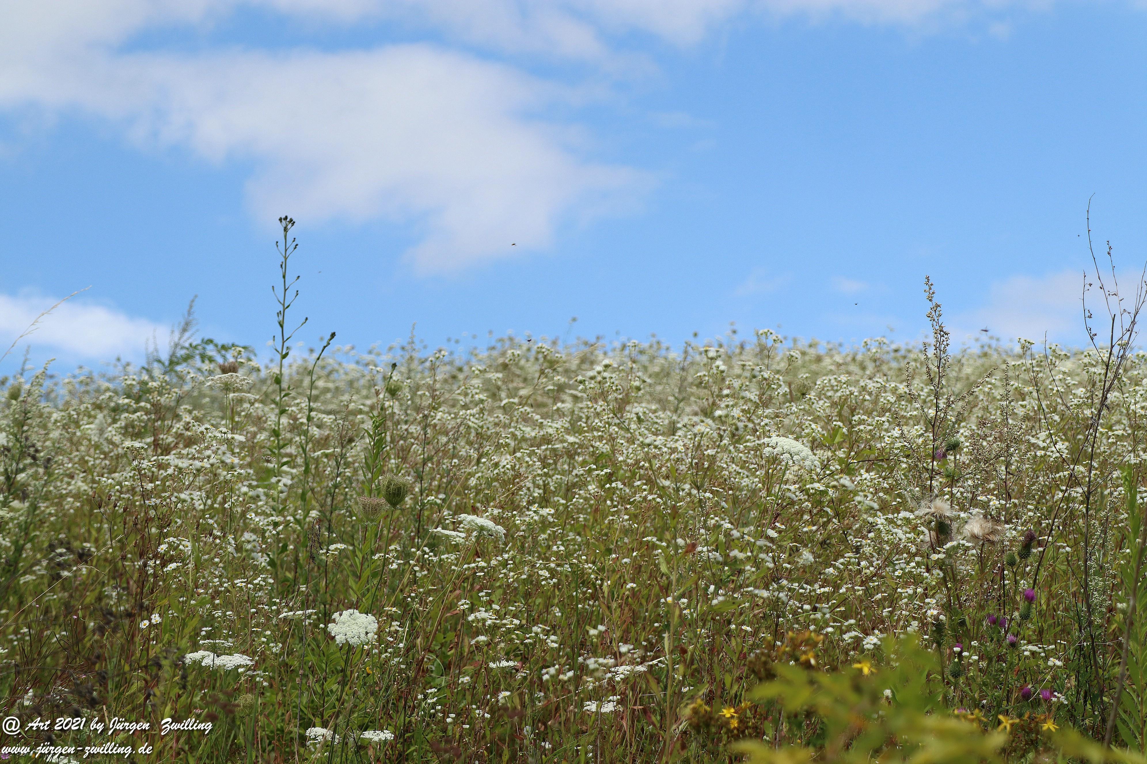 Sommerweiss