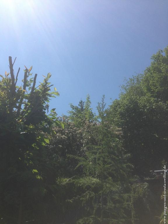 Garten 28.05.2013