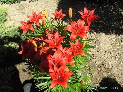 Gartenbilder vom 30.05.2009
