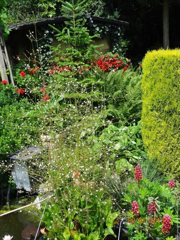Garten 09.10. und 11. Juli