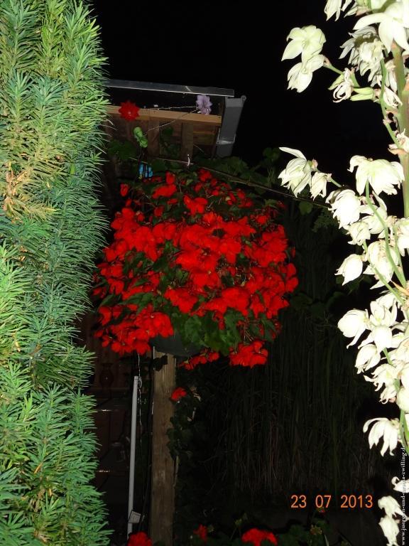 Garten bei Nacht 23.07.2013