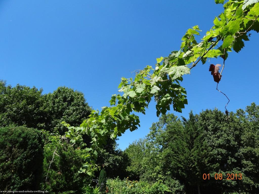 Garten 01.08.2013