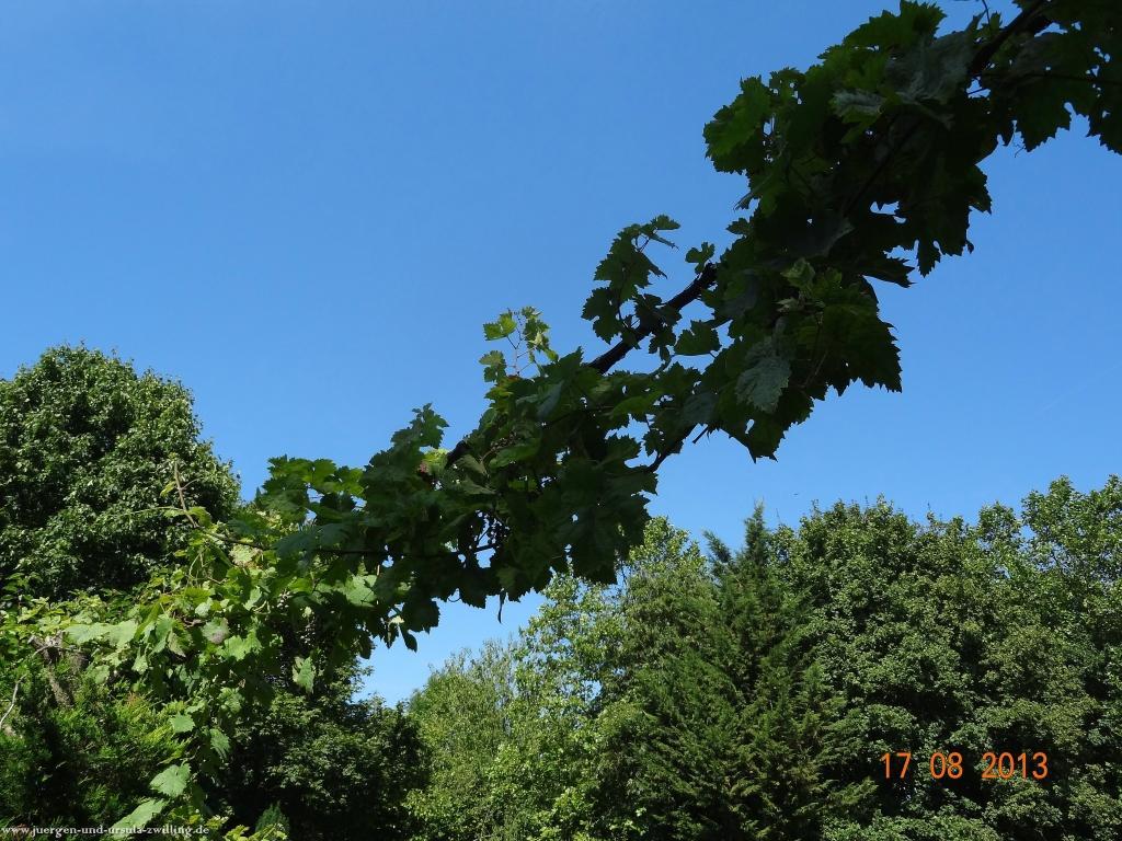 Garten 17.08.2013