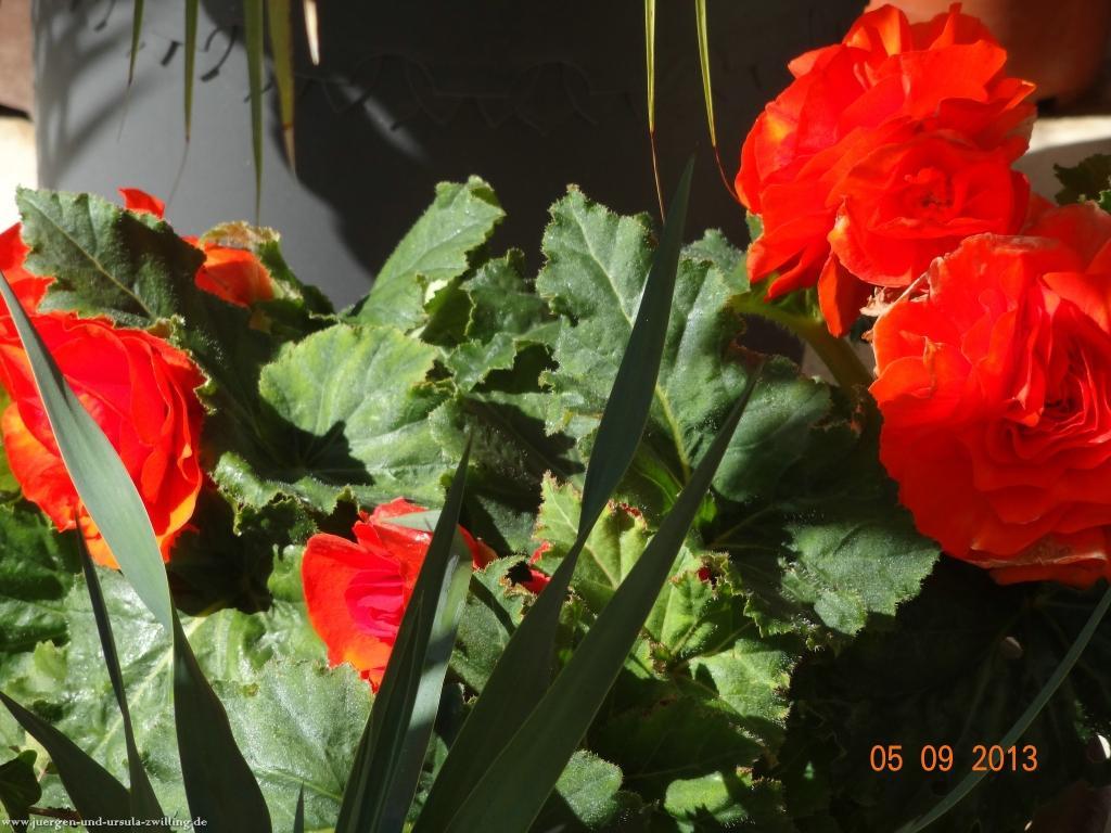 Spätsommer im Garten 05.09.2013
