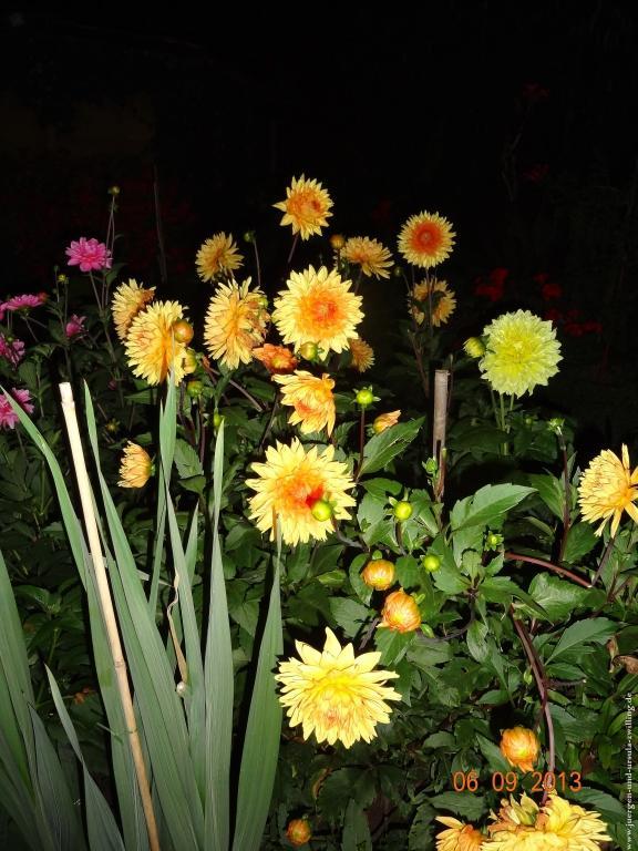 Sommernacht im Garten 06.09.2013