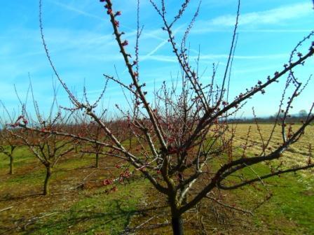 Frühlingserwachen in den Feldern von Mainz Finthen