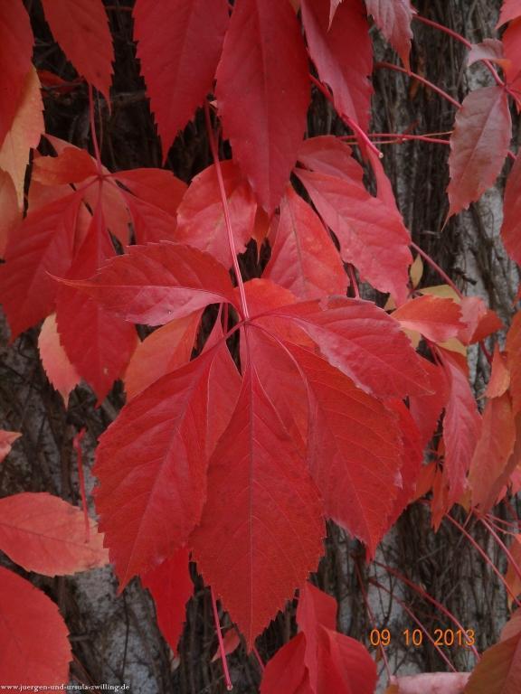 Herbst im Garten  09.10.2013