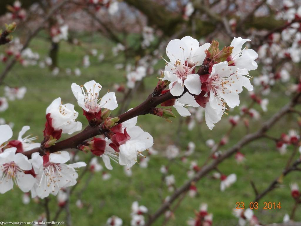Frühling in den Feldern  von Mainz Finthen