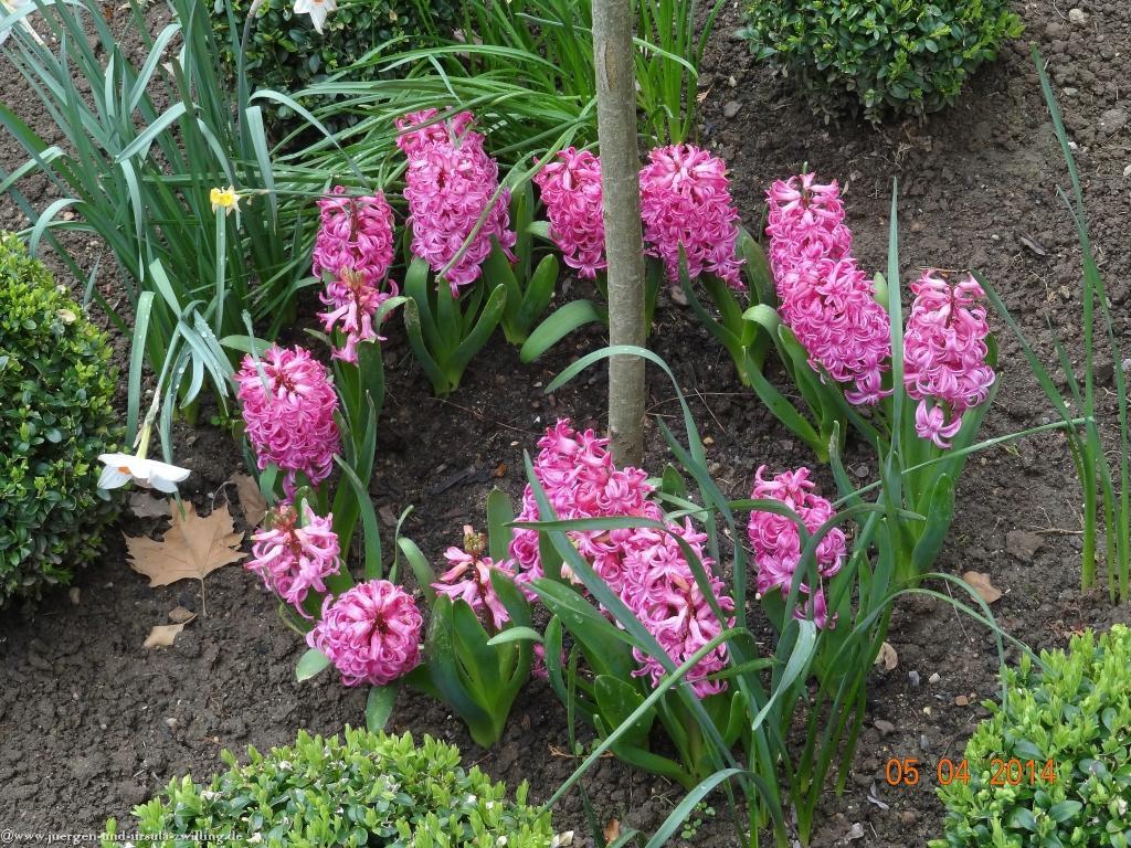 05.04.2014 Garten