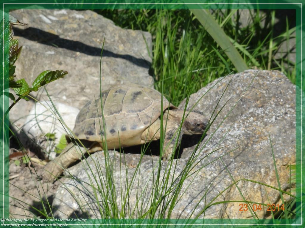 Schildkröten verlassen Winterquartier - Umzug in den Garten