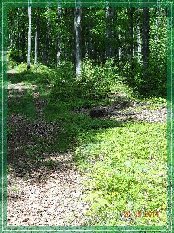 Philosophische Bildwanderung Premiumwanderweg Schachtenbach (Hennenkobel) - Wanderung - Bayrischer Wald