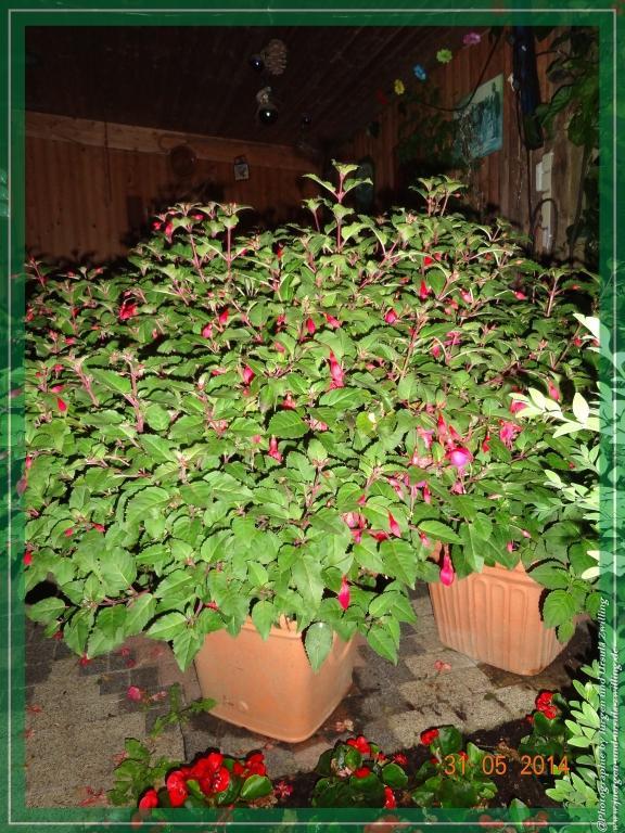 31.05.2014 Garten bei Nacht