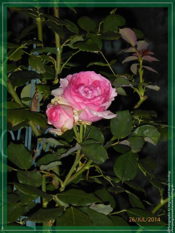 27.07.2014 - Garten bei Nacht