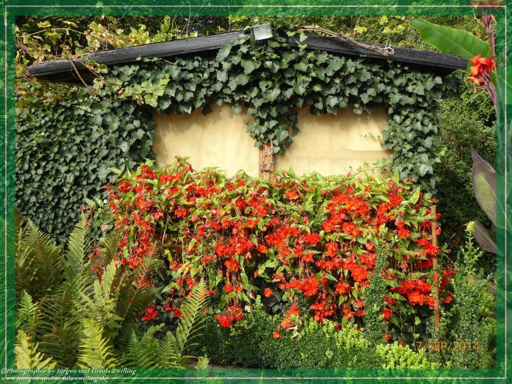 Gartenblick am 07.09.2014