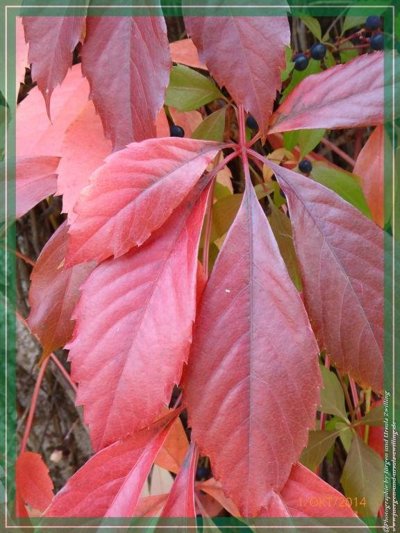 01.10.2014 - Farbenpracht des Herbstes