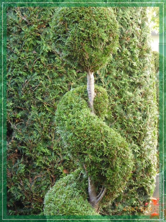03.10.2014 -Herbschnitt im Vorgarten