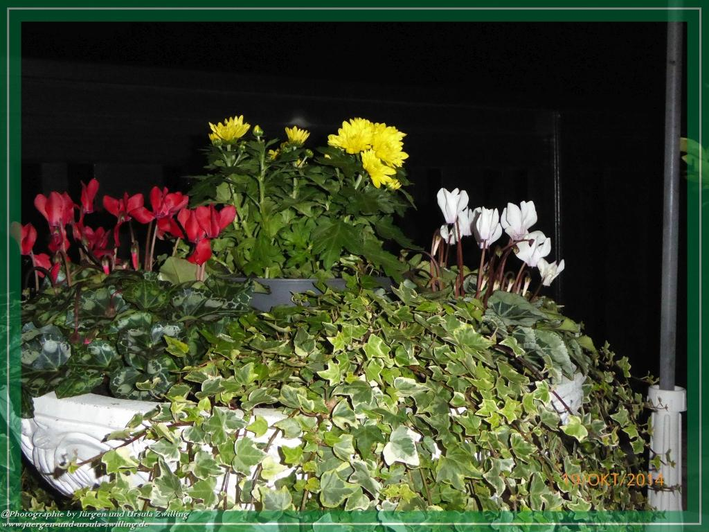 19.10.2014 - Garten bei Nacht