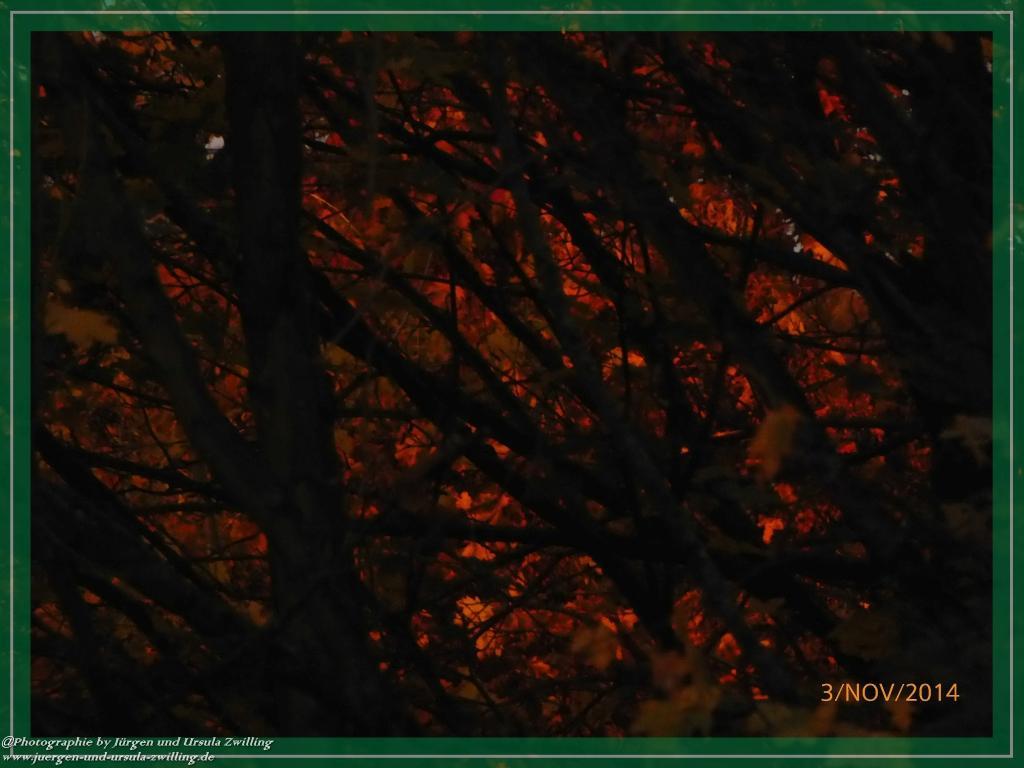 03.11.2014 Sonniger Morgengruß