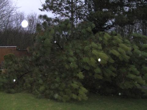 Unwetter - Gewitter - Sturm über Mainz