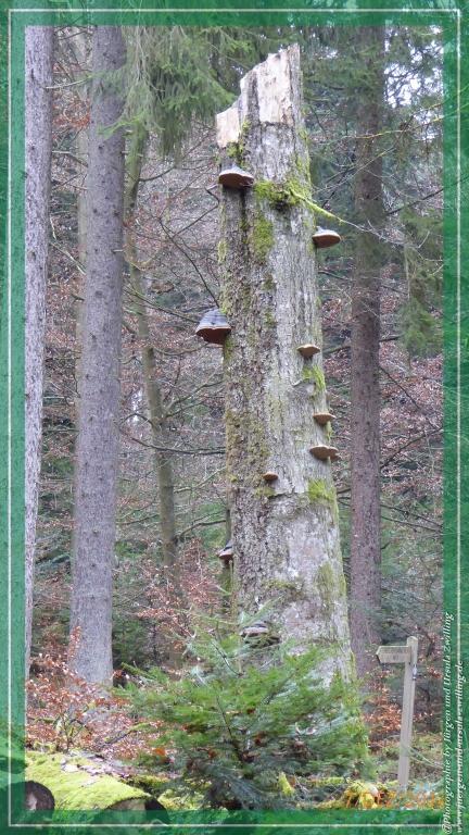 Philosophische Bildwanderung Panoramaweg Erbach - Michelstadt - Grafenschloss,Fachwerk und Panorama - Odenwald
