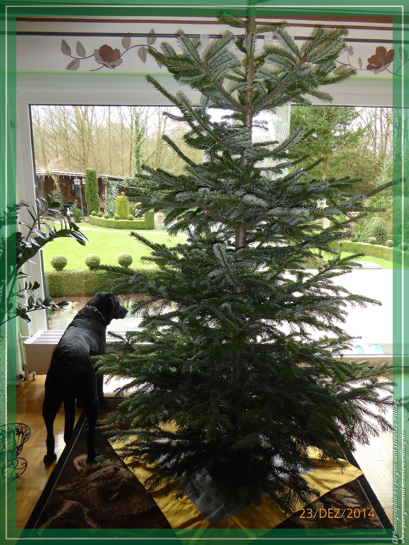 Gartenblick mit ungeschmücktem Christbaum