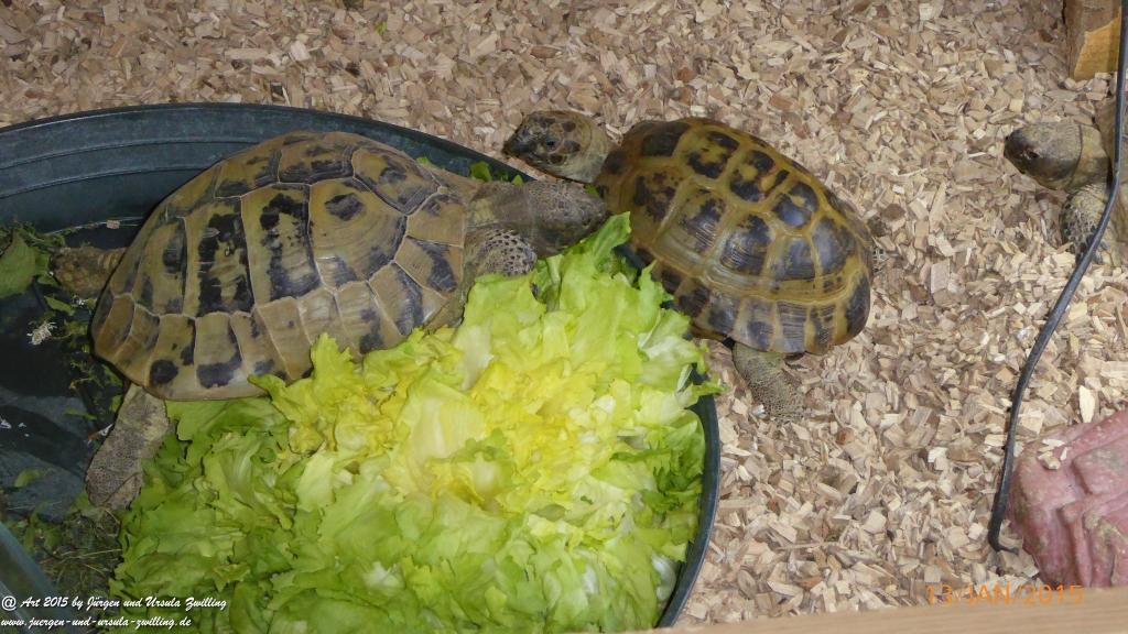 13.01.2015 Schildkröten im Winterquartier