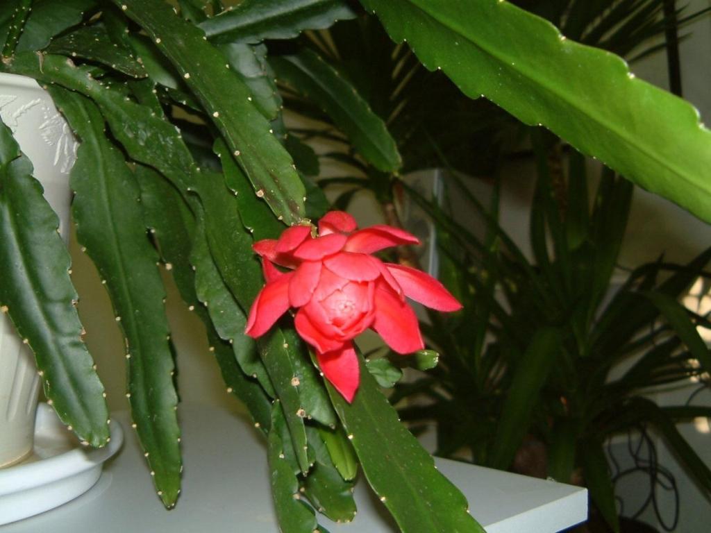 Gartenjahr 2002