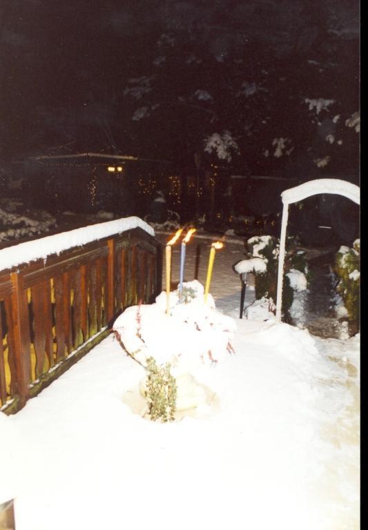 Gartenjahr 2001