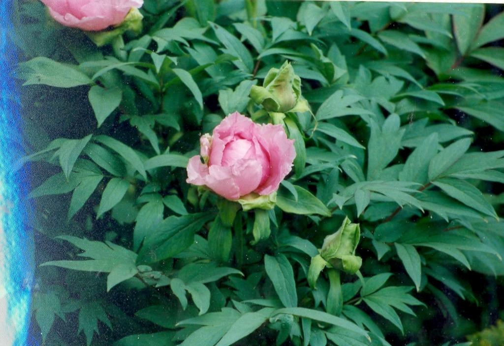 Gartenjahr 2000
