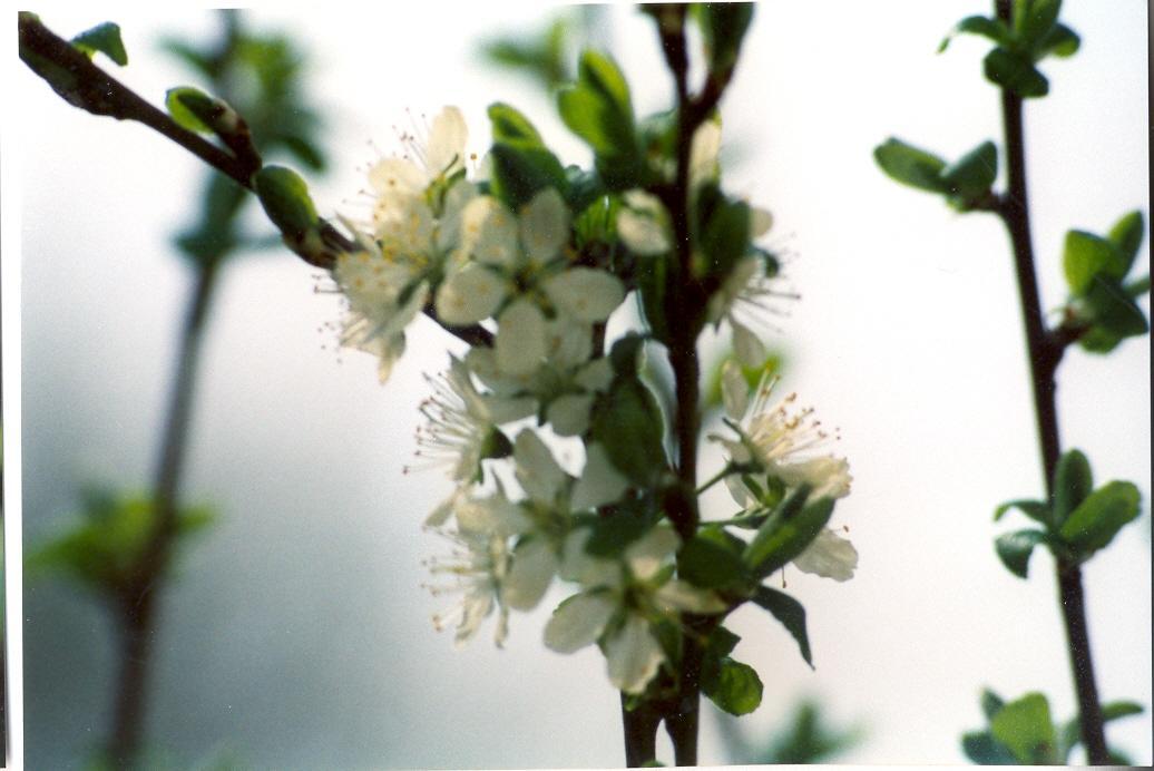 Gartenjahr 1997