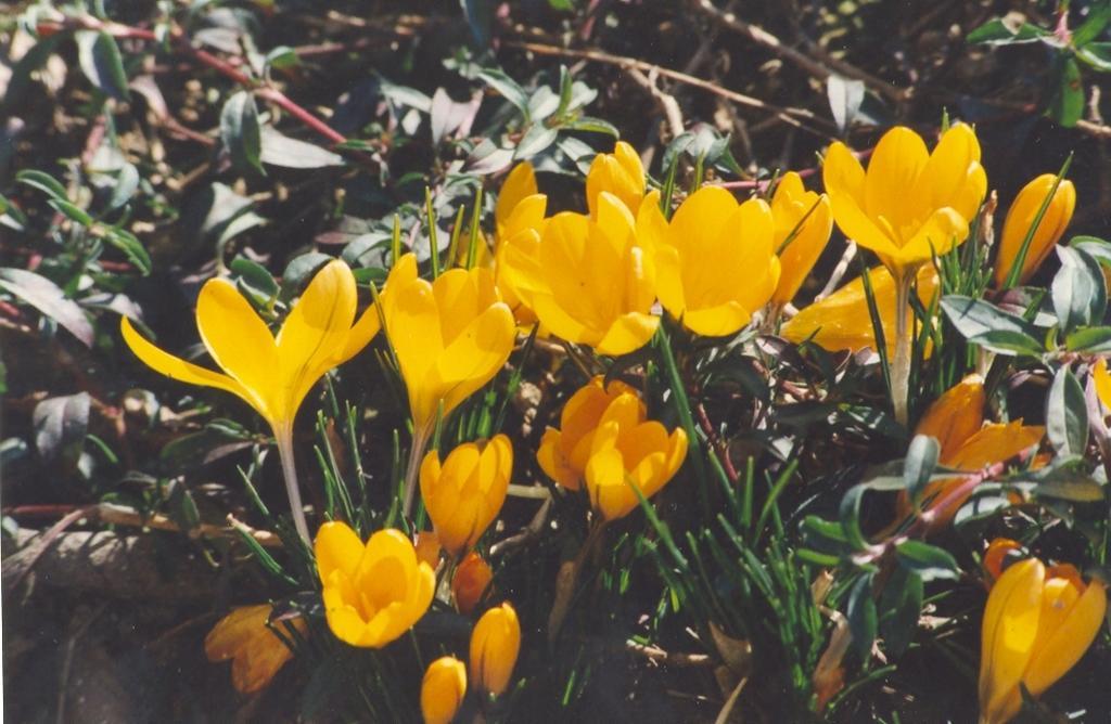 Gartenjahr 1994