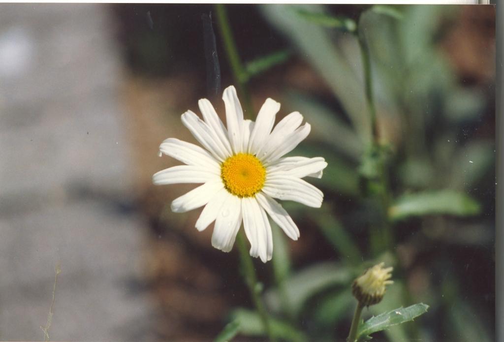 Gartenjahr 1993