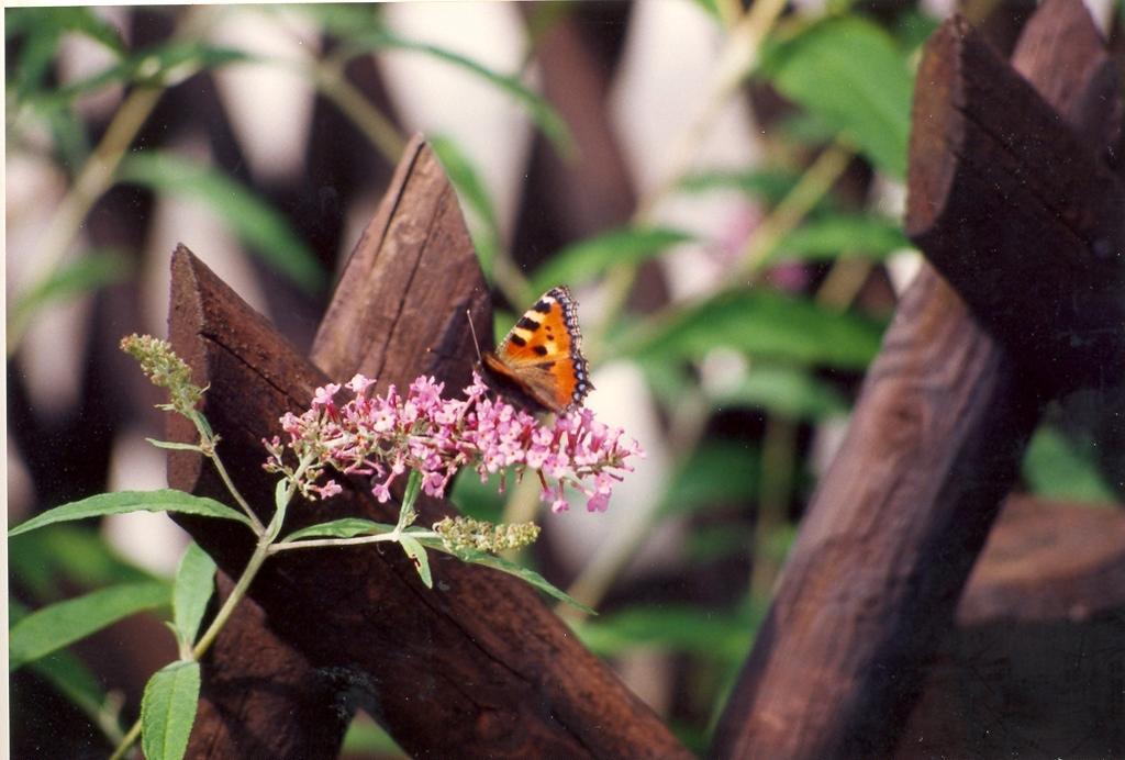 Gartenjahr 1992