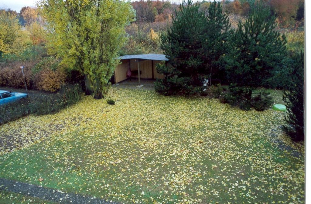Gartenjahr 1991