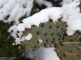 23.02.2015 - Noch ist Winter mit kleinen Frühjahrsboten
