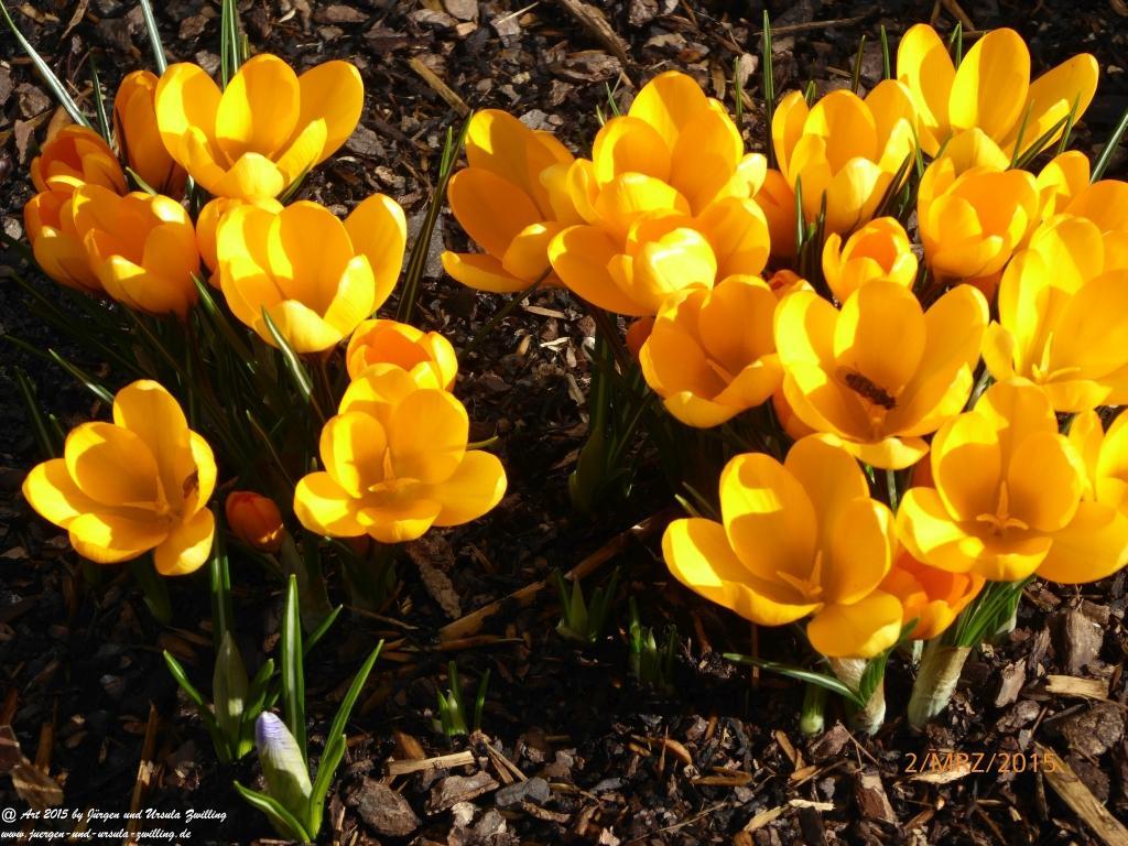 02.03.2015 Pünktlich zum meteorologischen Frühlingsanfang erwacht der Garten