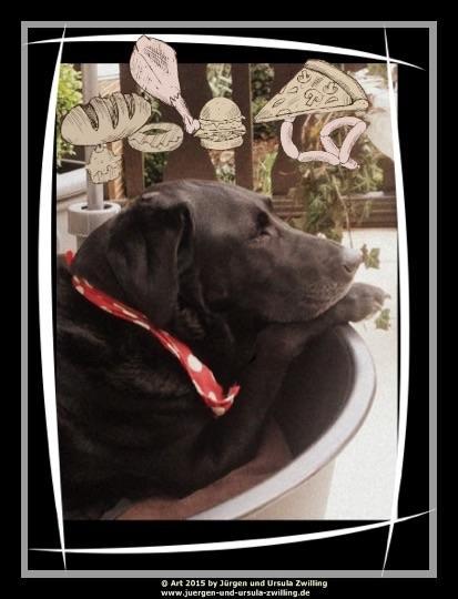 20.03.2015 Xenia\'s Hundeträume auf der Terrasse