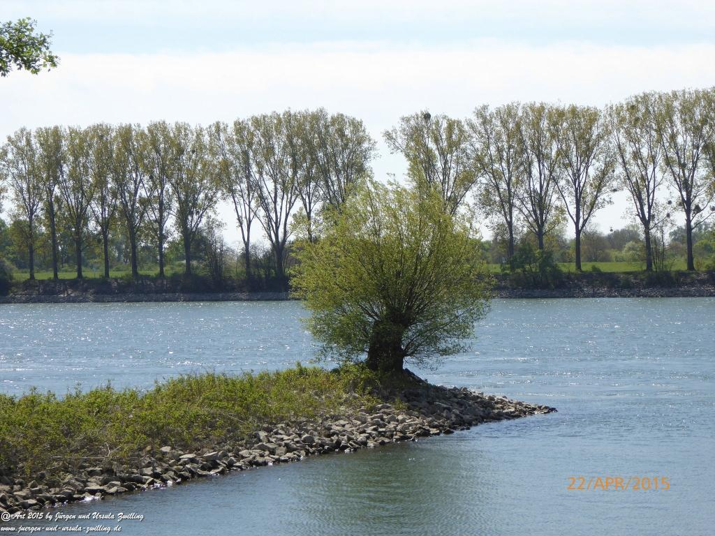 Philosophische Bildwanderung Kühkopf am Rhein