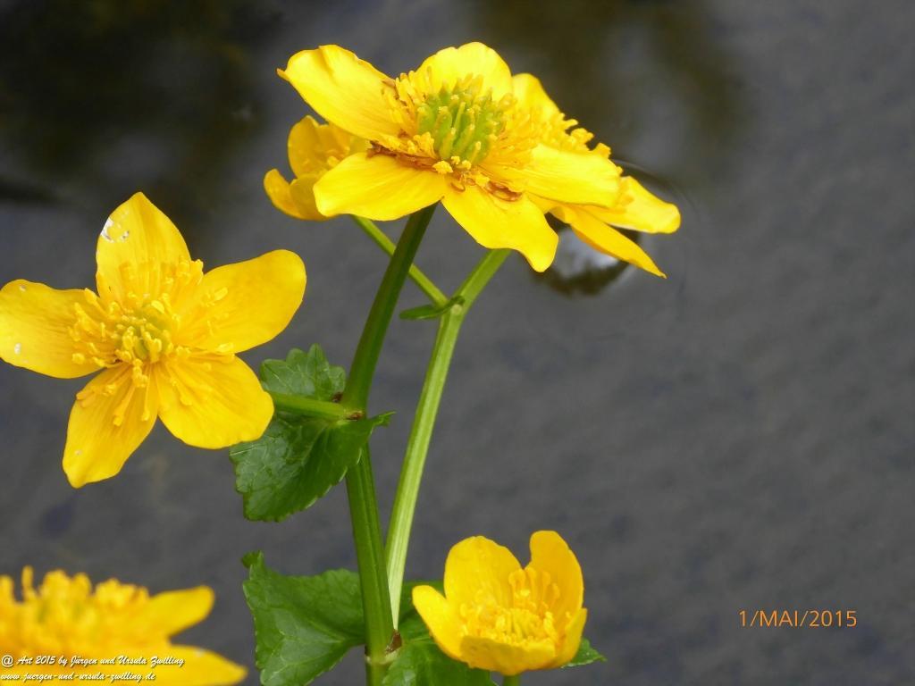 01.05.2015 ein bunter Strauß Blüten zum 1. Ma