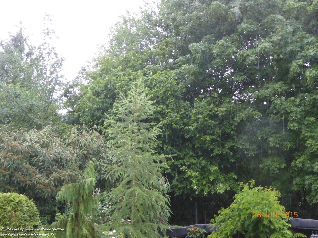 18.06.2015 Garten im lang ersehnten Regen