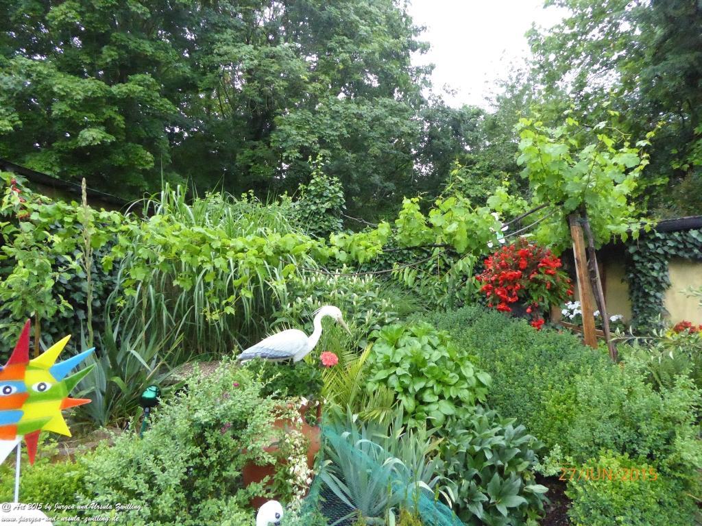 27.06.2015  Garten im Sommerregen