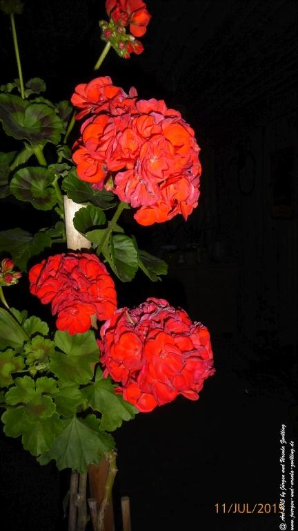 11.07.2015 Garten bei Nacht