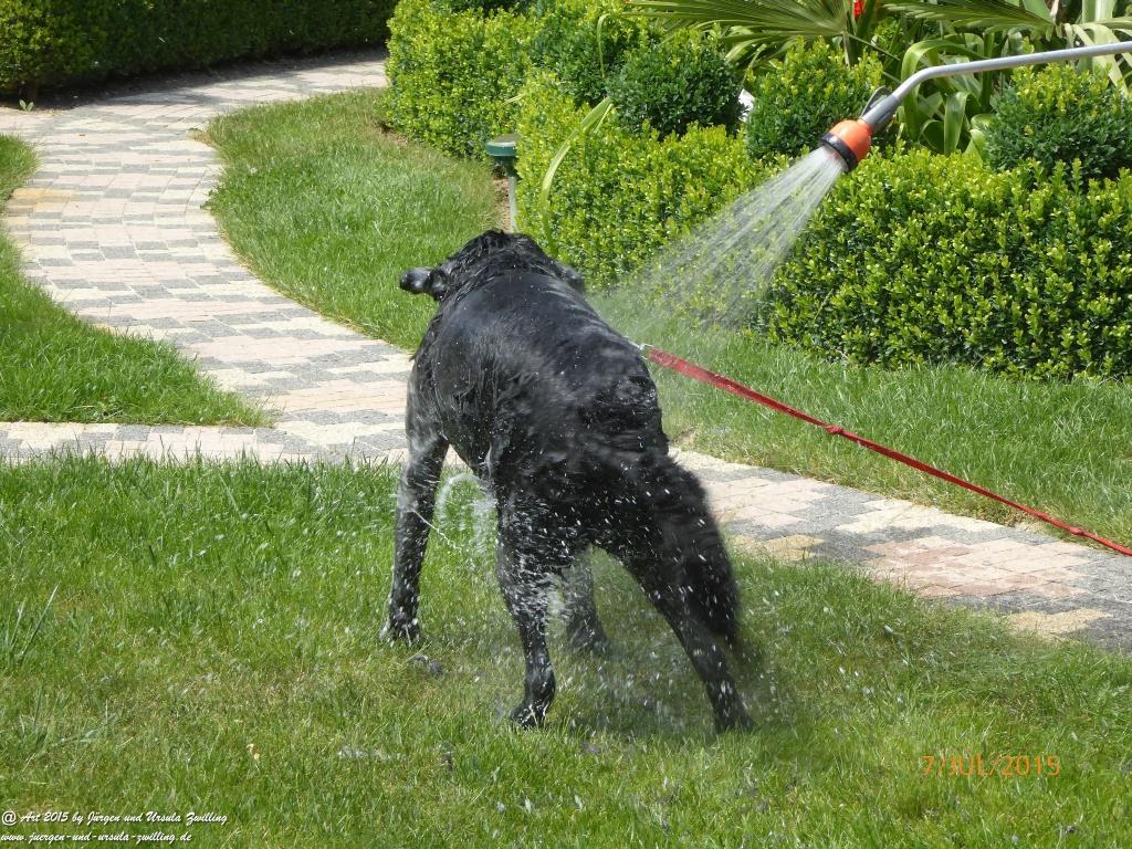 16.07.2015 Hundebadetag im Garten - Xenia wird geduscht