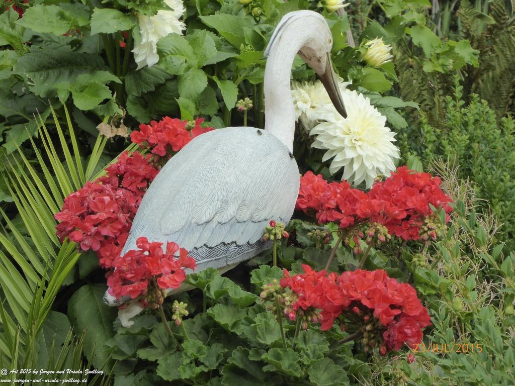 23.07.2015 lachsfarbene Geranien (Pelargonien)