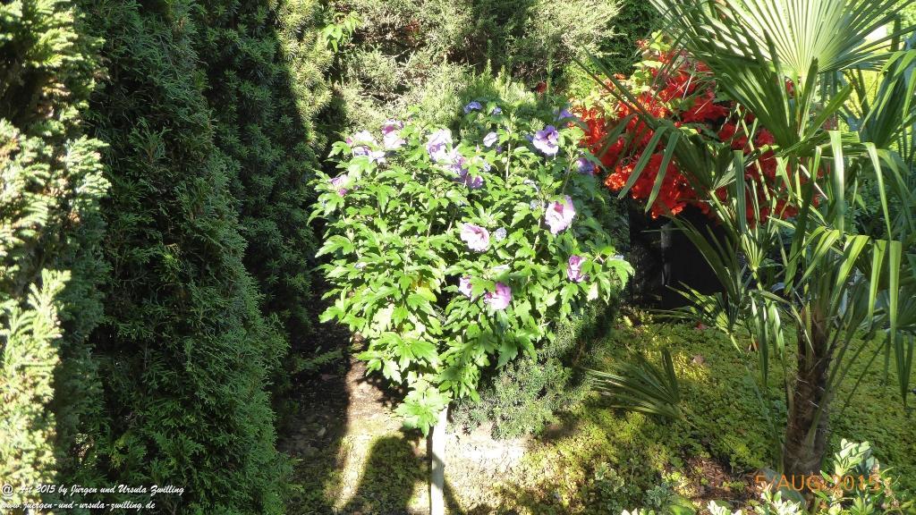 05.08.2015 - Hibiskus (Hibiscus)