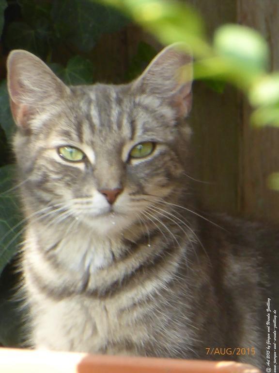 07.08.2015 Katzen - Riesling - Blick