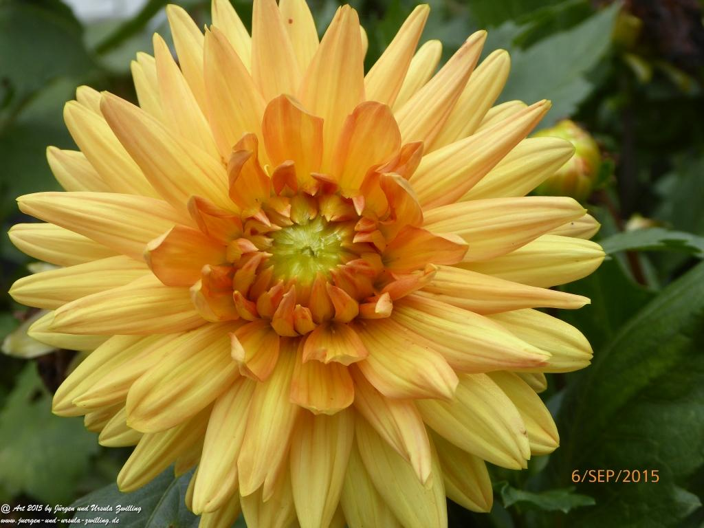 06.09.2015 - Garten nach unserer  Rückkehr - Omas Gartenpflege perfekt - Danke
