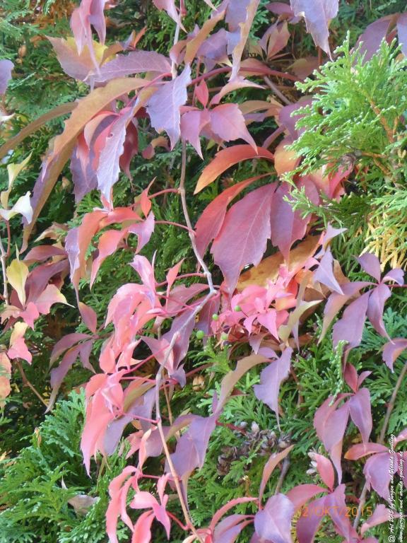 02.10.2015 Farbenspiel im Herbst