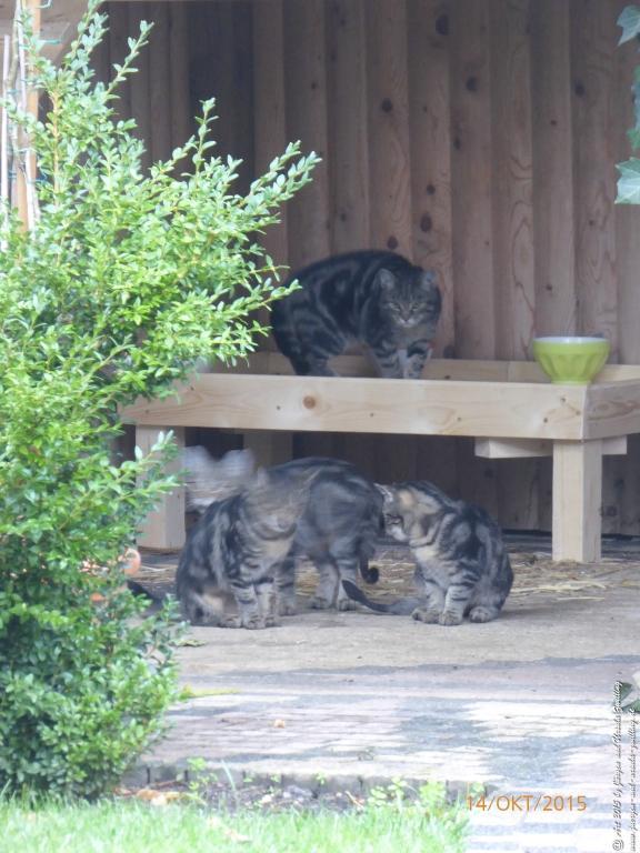 14.10.2015 Katze Mimi - Katzenkinder im neune Katzenhaus