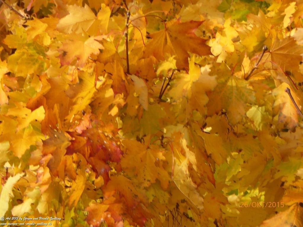26.10.2015 Bunter Oktoberausklang - Herbst